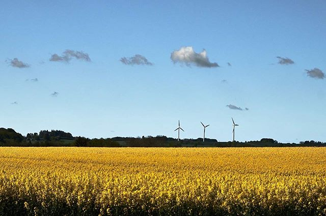 fields relax yellow electricalengineering windmills summervibes countryside visitdenmark sustainability clouds wonderlust electricpower nordicimages denmark sky