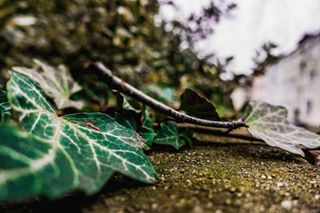 sony germany leaf early photooftheday saturday wuppertal pictureoftheday nature photography weather weekend picoftheday meinwuppertal