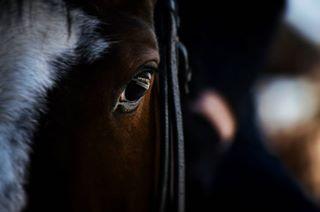 equinegirl equineworld photographersaroundtheworld carevacuprija equinephotography beograd thoroughbred hipodrom hipodromusrcubeograda pferde fotografia photographer equestrianism fotografie purasangreingles equestrians pferdeschoenheiten royalsnappingartist