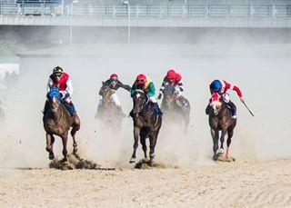 carevacuprija purasangreinglés🐎🐎🐎 equestrians equestrianism hipodrom pferdeschoenheiten photographersaroundtheworld equineworld pferde thoroughbred equinephotography royalsnappingartist photographer fotografia fotografie beograd
