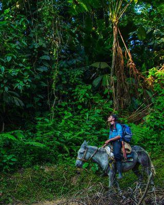 jungle natgeotraveleer yourshotphotographer biosphere conservationphotography hiking andes leadonclimate climatescience climatechange thewarmestplaceonearth biodiversity teyuna tayrona santamarta sierranevadadesantamarta colombia vegan