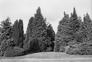 50mm trees ilfordhp5 kodak400 film filmphotography le75 analogisnotdead belgium argentique filmisnotdead buvrinnes village graphical zoom ilfordfilm canona1 kodak analog