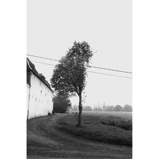 analogisnotdead analog kodak ilfordfilm trees filmphotography film village halfdone kodak400 canona1 argentique pictureoftheday le75 belgium ilfordhp5 buvrinnes zoom filmisnotdead 50mm