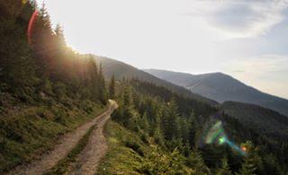 forest way ukraine mountains карпати похід мандри гори travel подорож carpathiangram