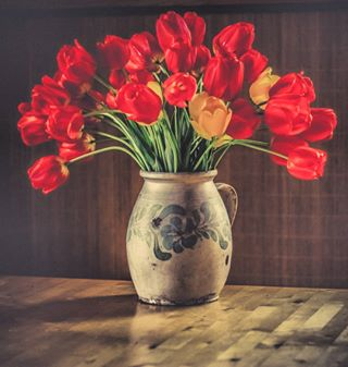 tulips spring photography flower