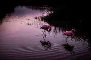 Antonio Giacometti photo 1062133