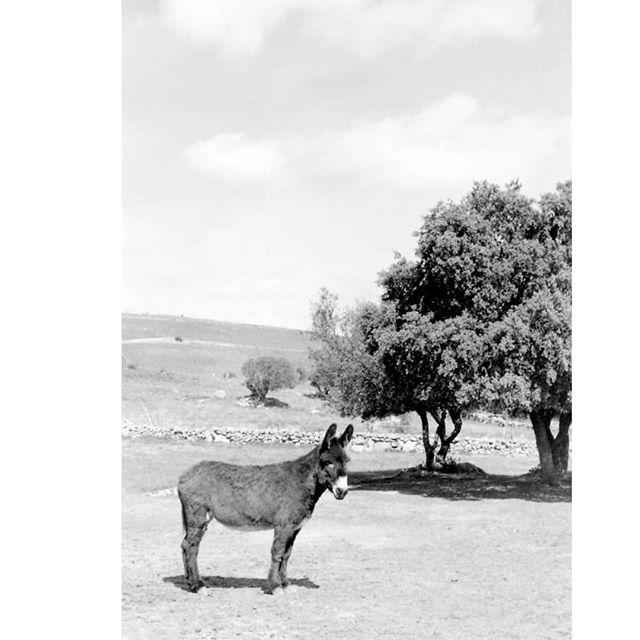 35mmpostcards photo: 2