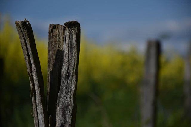 hoppler_photography photo: 2