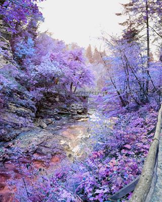 purple what photography nature