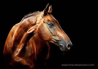 cover studio horsephotography pferd