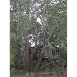 wood treehouse nature mobilephotography 2018 belgrade island tree womanphotographer flood serbianphotography woodenhouse melancholy milicamacanovic spring houseonthetree