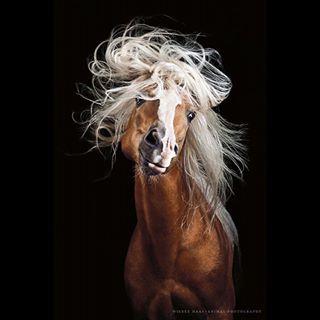 bestofequines equinephotography equus fineartphotography horsephotography horsesofinstagram horsestyle instahorse pferdefotografie pferdeschoenheiten