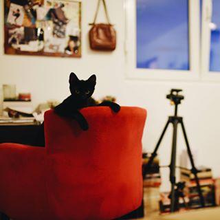 nikonuser d810 animals livingroom catsofinstagram 35mm sigmaart cat livingroomdecor nikon photooftheday blackcat