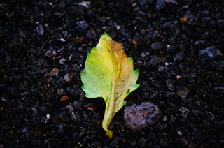 visionofpictures urbannature photography📸 photography nature minimalism leaves inspiration folow4folow followme earthescope dslrphotography❤️📷 dslrphotography colorcontrast alone