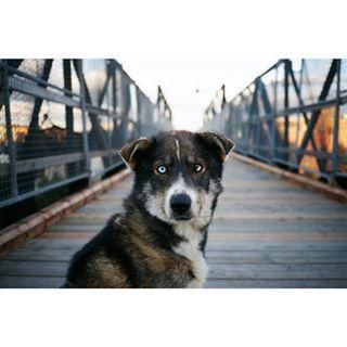 35mmfilm ishootfilm contaxt2 photography lategram filmphotography 35mm dogsofinstagram contax film filmcommunity filmcamera filmisnotdead