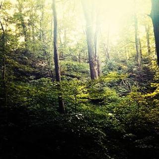 forest ontario woods redhill hamilton woodland canadiaforest
