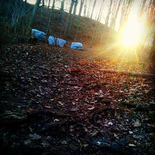 winterwoods urbanforest woodlandhike redhillvalley naturehamont forest