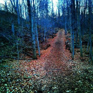 ontario forest redhillcreek canadian naturehamont