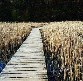arboretum bullrushes canada canadianwetlands wetlands hamont rbg reeds swamp wetlandsinspring naturehamont