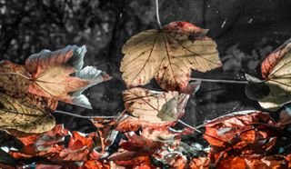 nice igerstyrol leaves innsbruck love hue igersinnsbruck nature red photooftheday tyrol instagram austria igersaustria colors naturephotography cool autumn