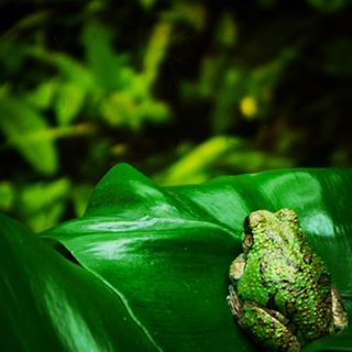 photography river capture marine moment leaves florest green frogs wild animals life national photo insects