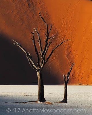 landscape nature travel colorful desert namibia landscapes landscapephotography trees dunes anettemossbacher