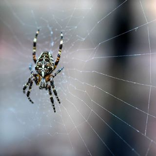 wildlife spiderweb spider scary photography phobia outdoors ourplanetdaily natureshots nature_brilliance natureaddict nature macroworld macrophotography macromood macroclique macro_captures kings_insects invertebrate insect_perfection insect igbest_macros hairy fear earthvisuals earth_deluxe creepy arachnid animal