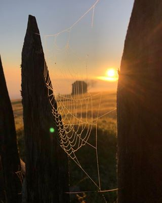 spiderweb sunrise fog bucovina