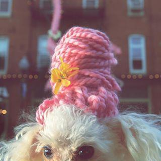 flamingo dogsofinstagram wig diy poodle toypoodle hairdoo honbar baltimorehair hon puptrait baltimore beehive honfest hair dogcostume pink