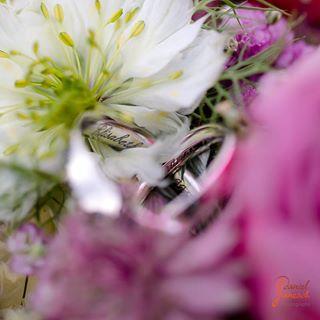 ring ehering makro ringe flowers hochzeit macro weddingring blumen blooming floral rings blume wedding flowery blossom eheringe bloom weddingrings flower