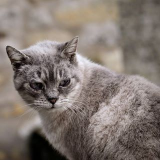 catslovers myfujifilm instadaily stray straycat wild catsofinstagram cat pussy fujixt10 catstagram fujifilm noname