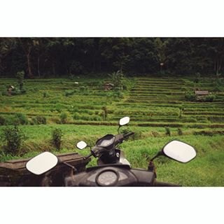 adventureawaits bali exploring greenbeauty indonesia islandlife junglebook junglefever photographysouls reallife ricefields sideman travelgram travellingman villagelife vsco vscobulgaria