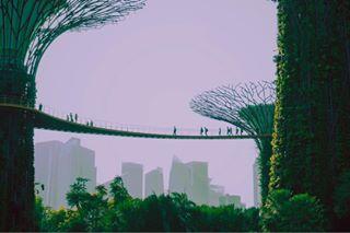 travelpgotography minimalsoul silhuettes gardensbythebaysingapore supergrovetrees asia futuristic travelgram vscobalkan outlines skycity singapore sundown gentlecolours vscobulgaria minimal gardensbythebay supertrees minimalistic traveldiaries