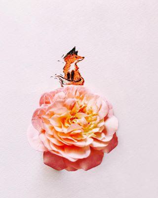 vscobalkan illustrationart fairytale creativelife myroses littlethings foxysden forestcreature naturallight homegrown peachrose thelittleprince davidaustinroses fairytalegarden vscobulgaria rosegarden peachypink foxy mydesign creative gentlesoul vsco illustration roselover boscobel englishrose
