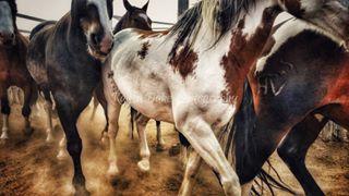 horsesofinstagram kaysadukephotography equinephotography equineart barhv myphotography harryvoldrodeocompany colorado broncsofthebarhv smugmug horsesarelife horses