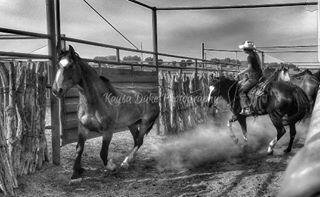 kaysadukephotography barhv harryvoldrodeocompany blackandwhitephotography colorado broncsofthebarhv myphotography rodeo prca horse cowboy sortingpens cowgirl