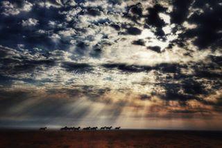 barhv broncsofthebarhv decorateinbarhv harryvoldrodeocompany fineart colorado horses prcahorsesaresocool equineart artforsale kaysadukephotography wallart