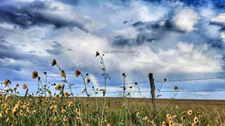 sunflowers rainbow myphotography kaysadukephotography fence doublerainbow countryroads country coloradotography colorado clouds