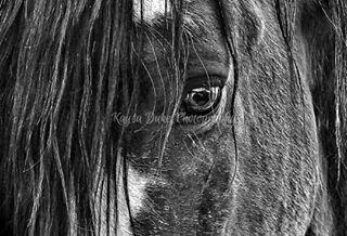 rodeo prca horses horse harryvoldrodeocompany fineart equineart cowboy broncsofthebarhv blackandwhitephotography barhv artforsale