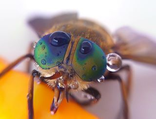 fly eyes photography likeforfollow colors stacks allhashtags macro beautiful bug macrophotography