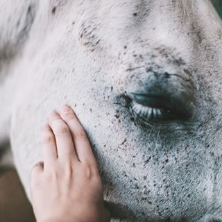 инстаграмнедели odessa ukraine_blog picoftheday такяснимаю love vscogood horsestagram animal vscoua animalsco whitehorse nature crimea horse photooftheday nadyachudina 85kcontest exploreeverything livefolk ukraine beauty neverstopexploring petsofinstagram igukraine visualsgang visualsoflife horsesofinstagram vscoukraine