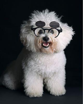 bichonfrise dog whitedog white pasić cutestdogs ljubimac happy dogphotography pet dogs dogsofinstagram cute pas dogstagram mydogiscutest pako doggy bichon
