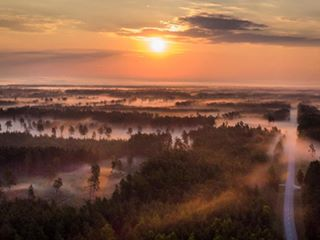 hiiumaa foggyforest fog forest sunrise sunrise_pics sunrisefog