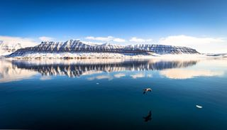 arctic arcticsea bluesky landscape mountains nature norway peaceofmind reflection seagull svalbard