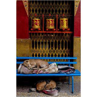 prayer instatravel dogsofinstagram fujifilmxt20 dogs streetphotography fujinon fuji photographer instadaily fujifilm tripotocommunity buddhism shutterhubindia winter color