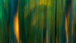 wood trees sunrise photooftheday photography panorama paint nature motion love longexposure light leaves landscape green forest art abstractart abstract