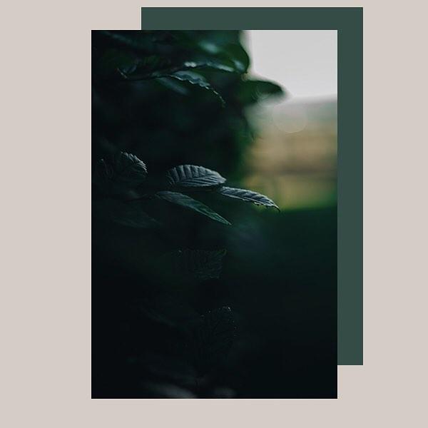 camille.tinon photo: 0