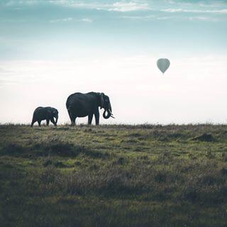 acolorstory adventure picoftheday wildlifeplanet balloon travel africa makemoments wildlife dream picture elephant kenya