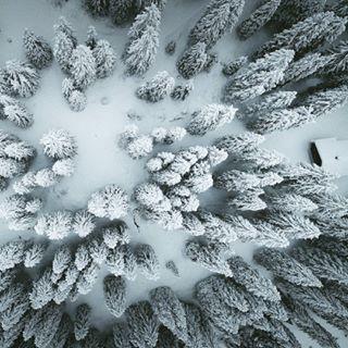djiphantom trees skypixel winter switzerland dronephotography instamood mood snow myswitzerland drone nature arialphotography