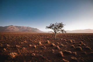 pursuethelight yourshotphotographer canonphotography liveauthentic desert artofvisuals avisualcreative namibiatravel namibia gramtrees earthpix weltraumzine namib atlastrials myfeatureshoot canon stademagazine folkgood agameoftones naturephotography seenamibia minimalzine wildernessculture moodygrams justgoshoot